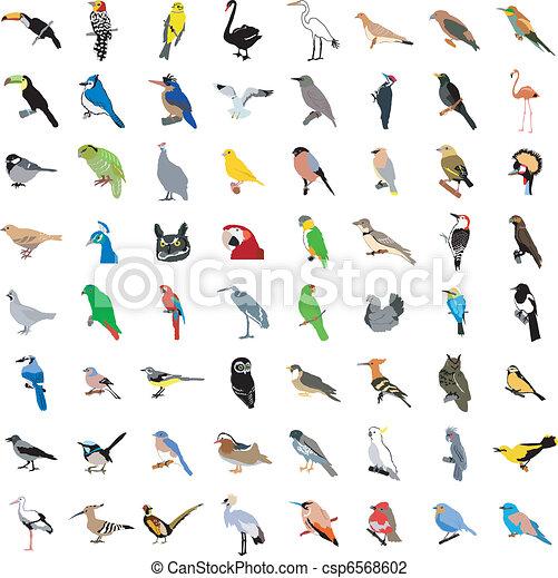 Big collection of birds - csp6568602