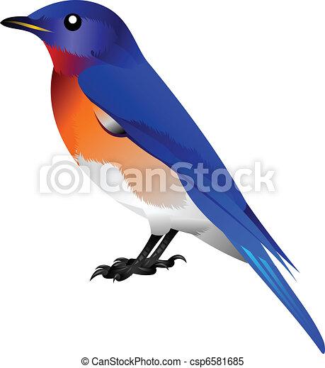blue bird with orange breast - csp6581685