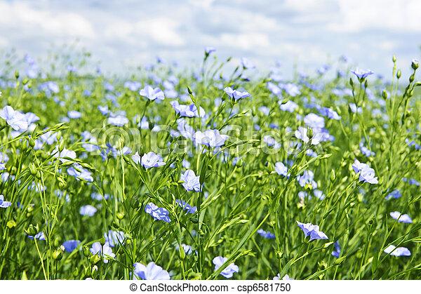 Blooming flax field - csp6581750