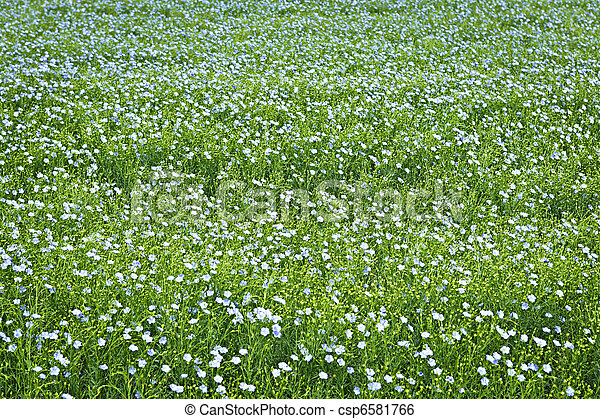 Blooming flax background - csp6581766