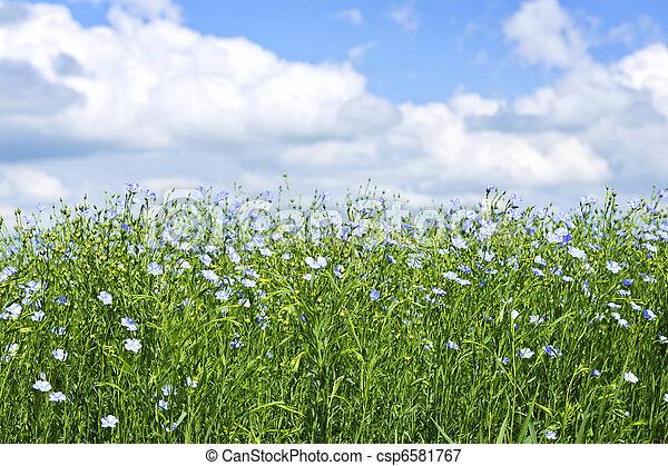 Blooming flax field - csp6581767