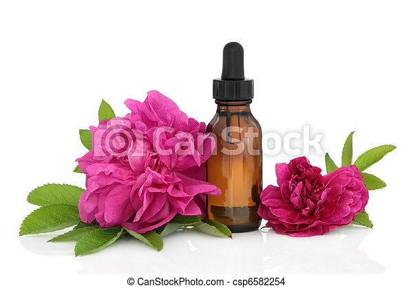 Rose Flower Essence - csp6582254