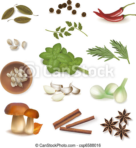 Group of spices. Vector.  - csp6588016