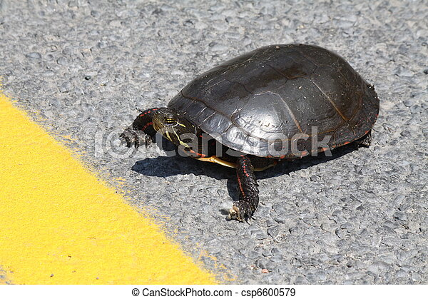 Midland Painted Turtle - csp6600579
