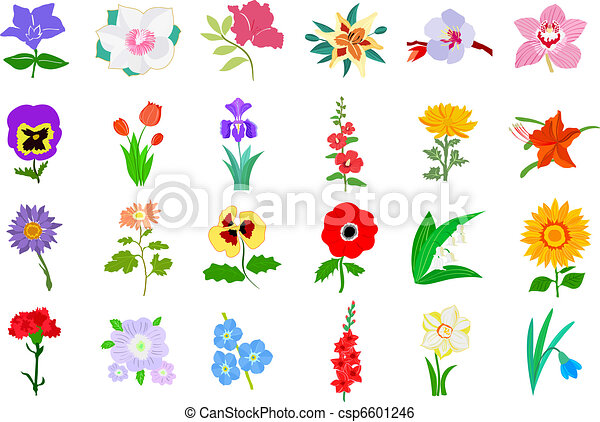 Set of flowers - csp6601246