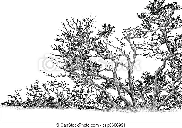 clipart de graphique arbre dessin noir et blanc automnal arbre csp6606931. Black Bedroom Furniture Sets. Home Design Ideas