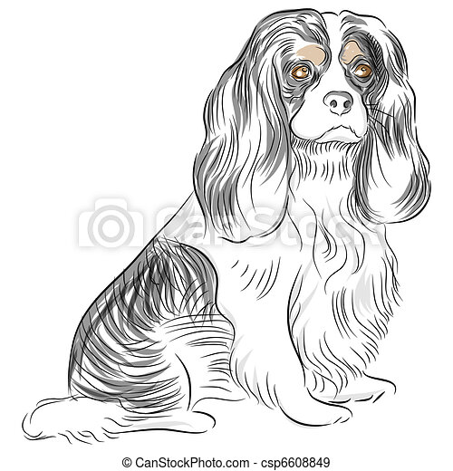 Pure Bred Cavalier King Charles Spaniel Dog Drawing - csp6608849