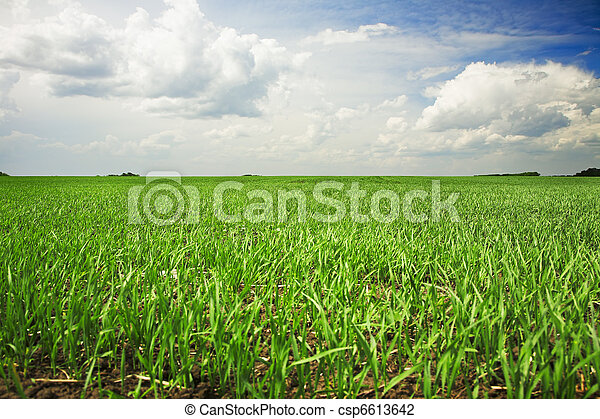 agricultural field - csp6613642