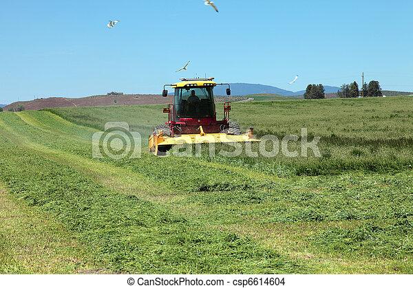 Organic agriculture & farmlands. - csp6614604