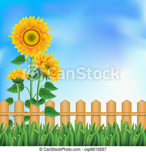 Background with sunflowers. Mesh. - csp6619267