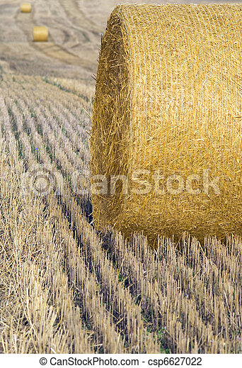 Harvested crop - csp6627022