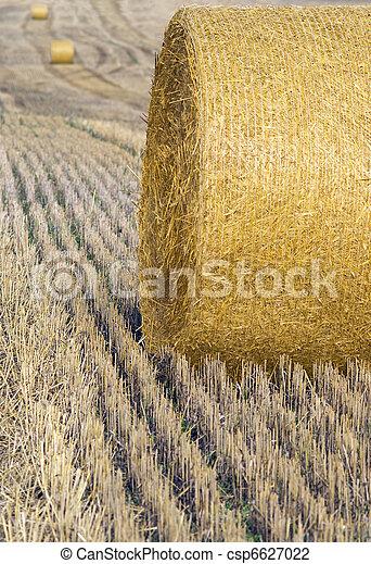 Harvested crop - csp6627022