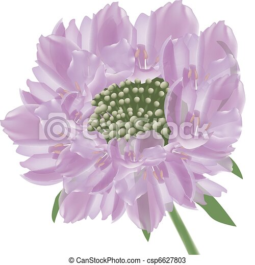 purple panel flowers - csp6627803
