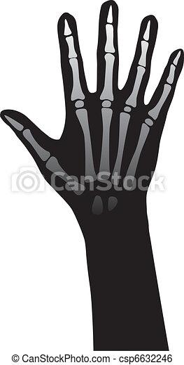 Hand anatomy - csp6632246