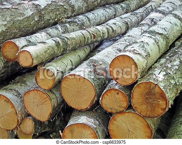 white birch logs heap, environment details - csp6633975