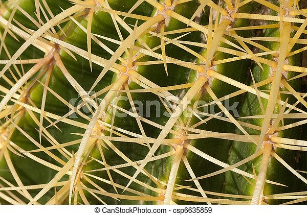 stock fotografien von kaktus closeup von geldstrafe kaktus arten in warm csp6635859. Black Bedroom Furniture Sets. Home Design Ideas