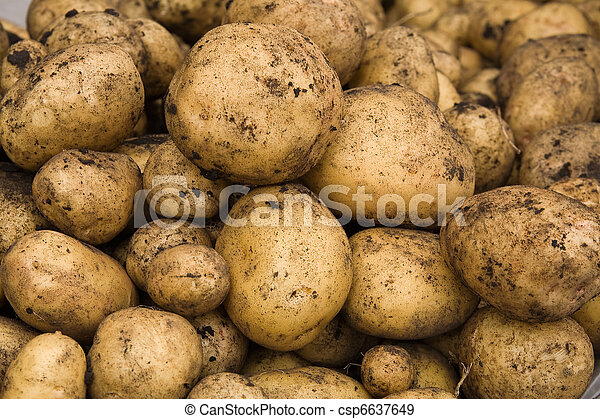 Fresh dug out potatoes - csp6637649