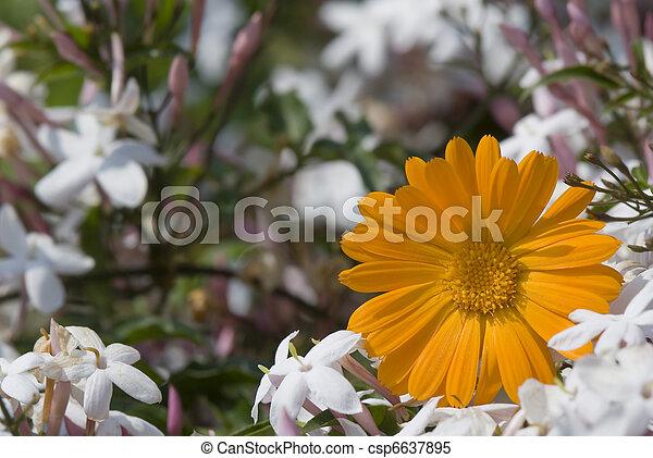floral fragrance  - csp6637895