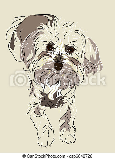 maltês, misturado, filhote cachorro, poodle - csp6642726