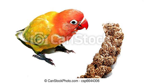 playing bird