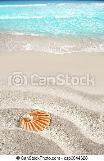 Caribbean pearl on shell white sand beach tropical - csp6644628