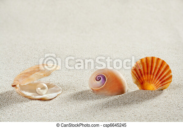 beach summer vacation background shell pearl clam - csp6645245