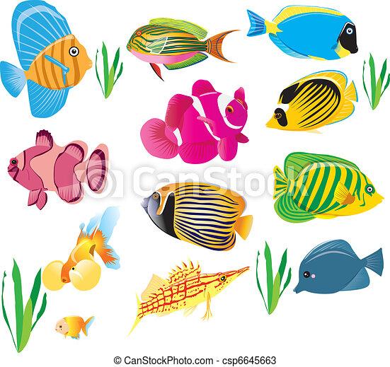 fish set - csp6645663