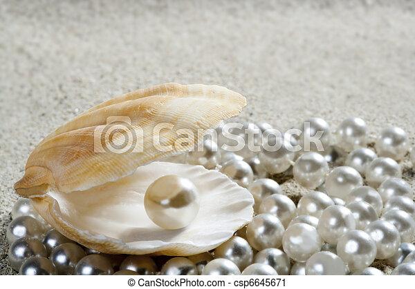 beach white sand pearl shell clam macro - csp6645671