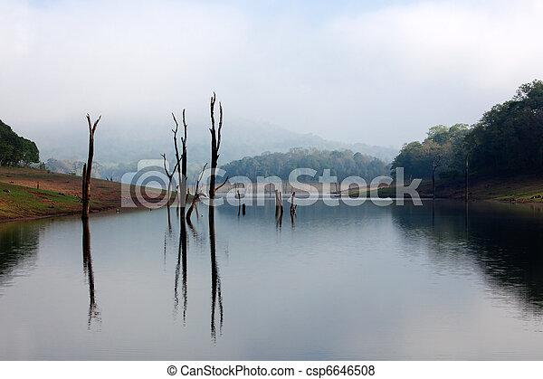 Periyar Lake Reserve - csp6646508