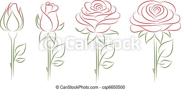 Blooming roses. - csp6650500