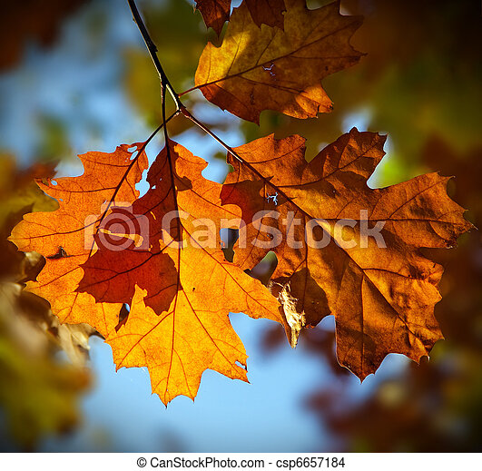 otoño, hojas - csp6657184