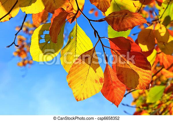 otoño, hojas - csp6658352
