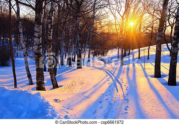 pôr do sol, parque, Inverno - csp6661972