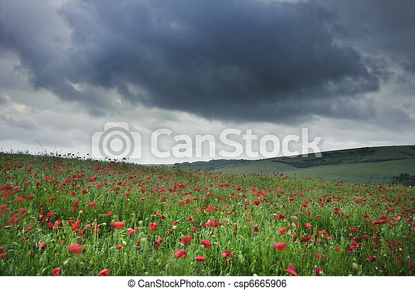 Vibrant poppy fields under moody dramatic sky - csp6665906