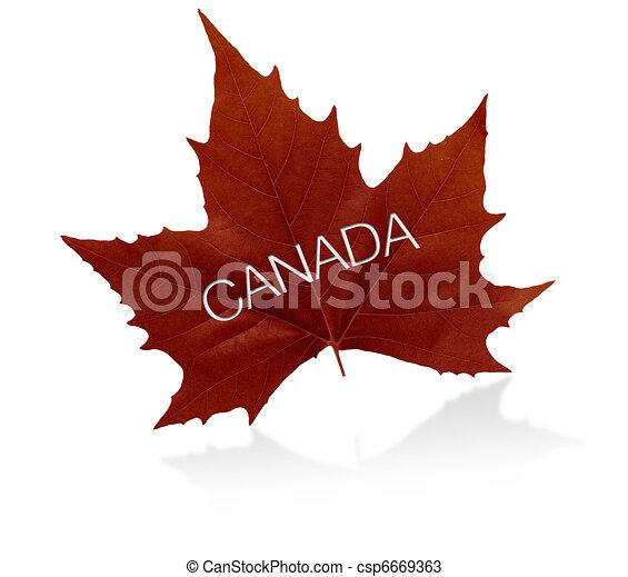 Canadian Maple Leaf - csp6669363