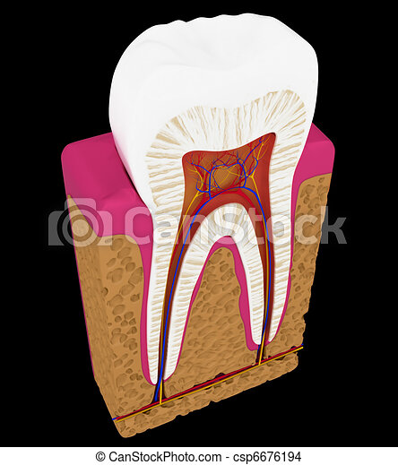 Tooth cut or section isolated - csp6676194