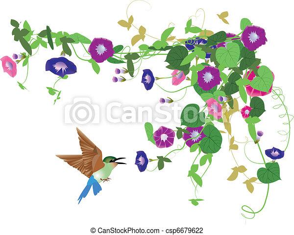 Fantasy garden background-Morning glory and bird   - csp6679622