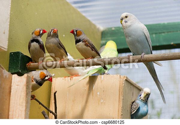 birds in a cage - csp6680125