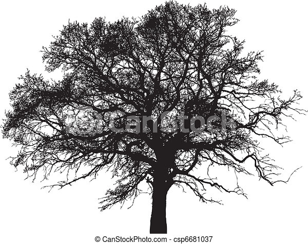 vector silhouette of tree - csp6681037
