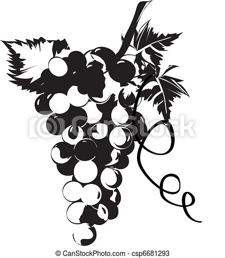 Grapes In Vines With Leaves 6681293 in addition Single grape drawing furthermore Carissimi Todays Mass Feria V Of Septuagesima furthermore Art Music Clip Art in addition Stock Photography Silhouette Grapes Illustration Image14311502. on vineyard art