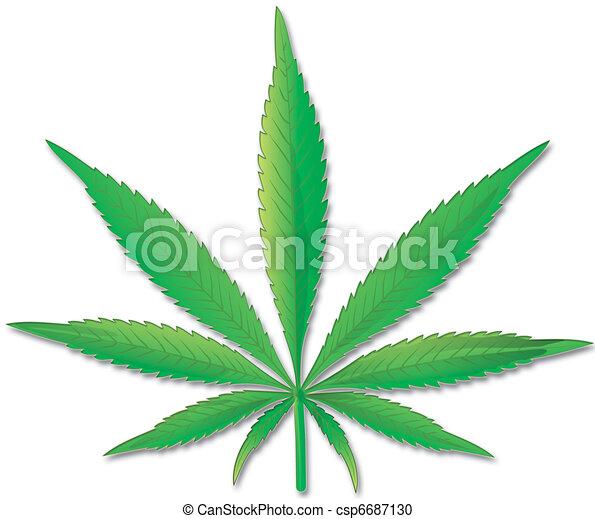 Cannabis leaf on a white background - csp6687130