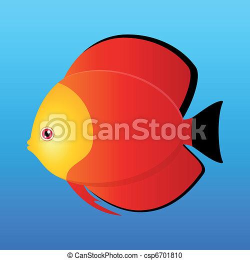 Red Monk Discus - csp6701810