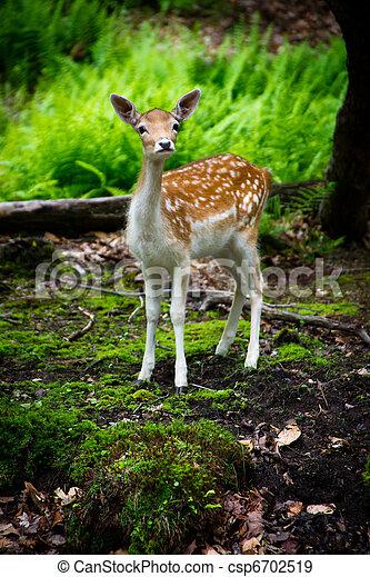 A Curious Young Fallow Deer - csp6702519