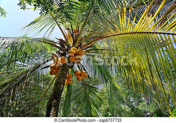Palmtree - csp6707733