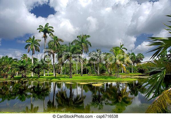 Tropical botanic garden - csp6716538