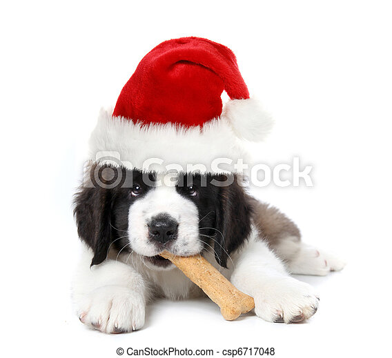Adorable Santa Clause Saint Bernard Puppy - csp6717048