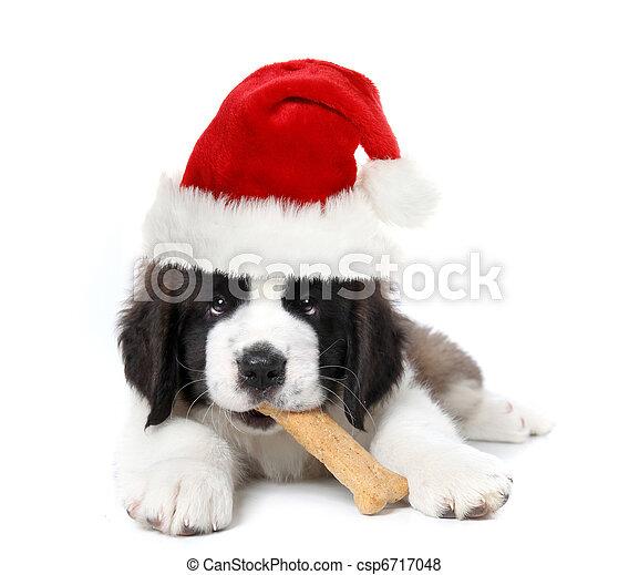 Adorable Santa Clause Saint Bernard Puppy - csp6717048
