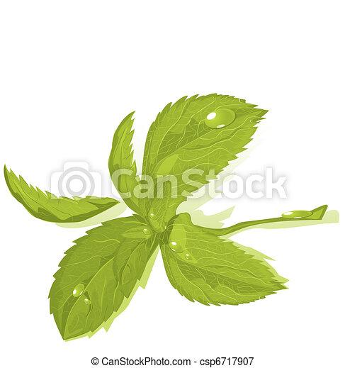 Fresh green mint leaves - csp6717907