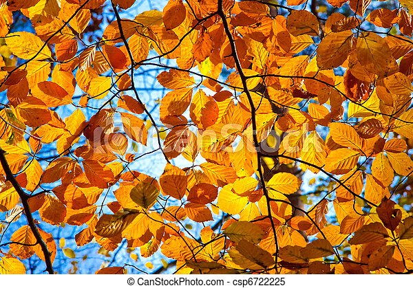 otoño, follaje - csp6722225