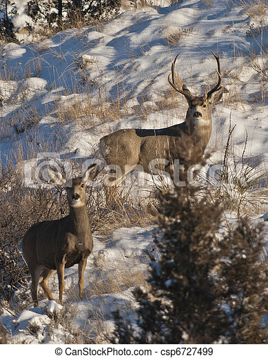 Deer - csp6727499